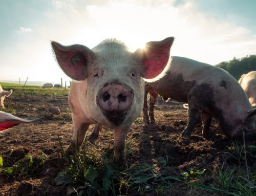 ABO: Maatwerk of vastgestelde regels hanteren  in het buitengebied van Oosterwolde?